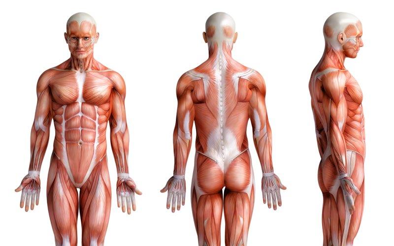 Outdoor sports og friluft linie anatomi fagbeskrivelse